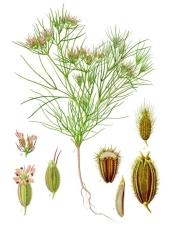 Kemmun plant198