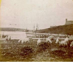 Pieta Quarantine harbour