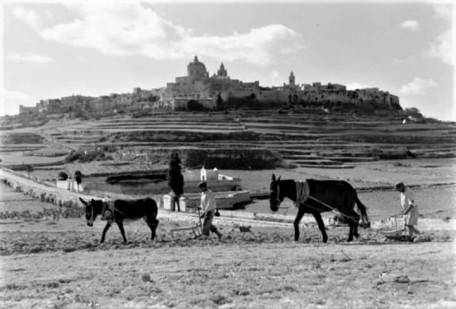 rural ploughing the fields mdina