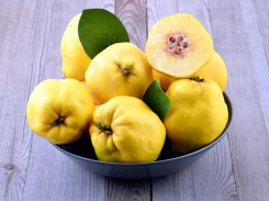 Fruit of Quince.