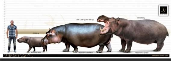 Hippopotamus1-738x591
